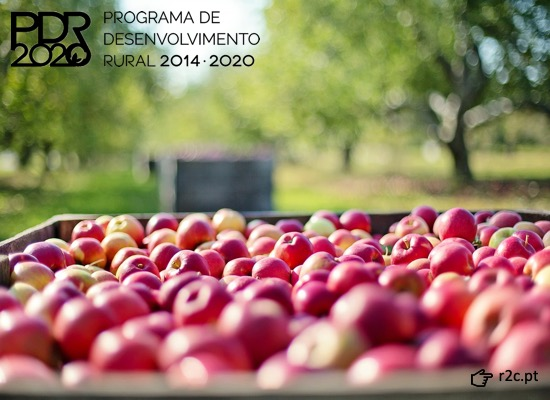 PDR 2020: candidaturas abertas